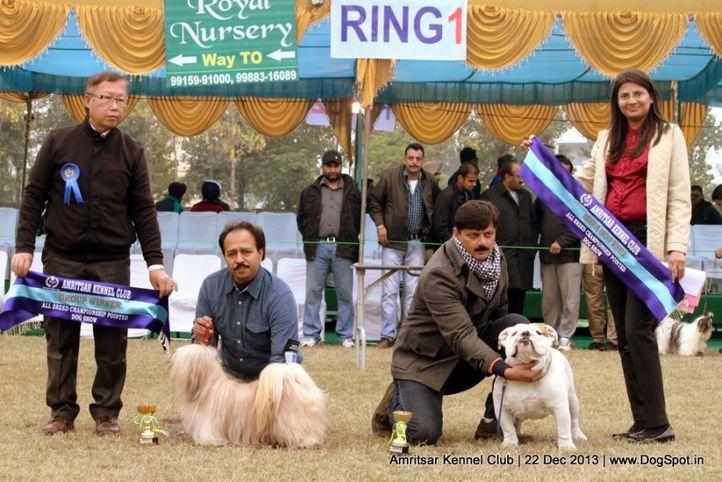 english bull dog,sw-100,, Amritsar Dog Show 2013, DogSpot.in