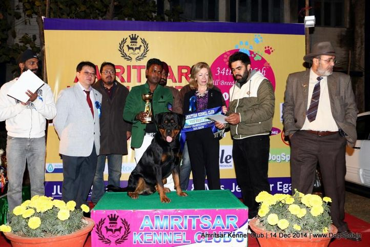 8th best in show,line up,sw-136,, Amritsar Kennel Club, DogSpot.in