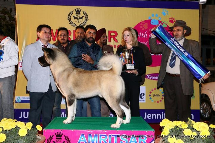 4th best in show,line up,sw-136,, Amritsar Kennel Club, DogSpot.in
