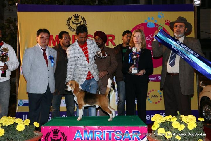 line up,reserve best puppy in show,sw-136,, Amritsar Kennel Club, DogSpot.in