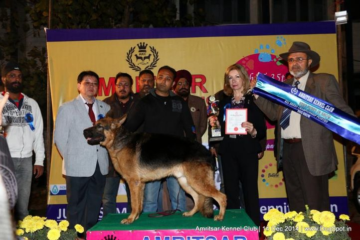 best puppy in show,line up,sw-136,, Amritsar Kennel Club, DogSpot.in