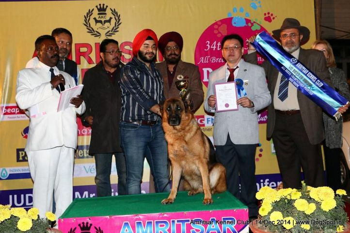 7th best in show,line up,sw-136,, Amritsar Kennel Club, DogSpot.in