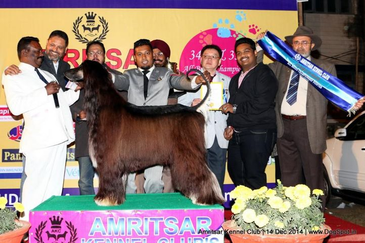 3rd best in show,line up,sw-136,, Amritsar Kennel Club, DogSpot.in