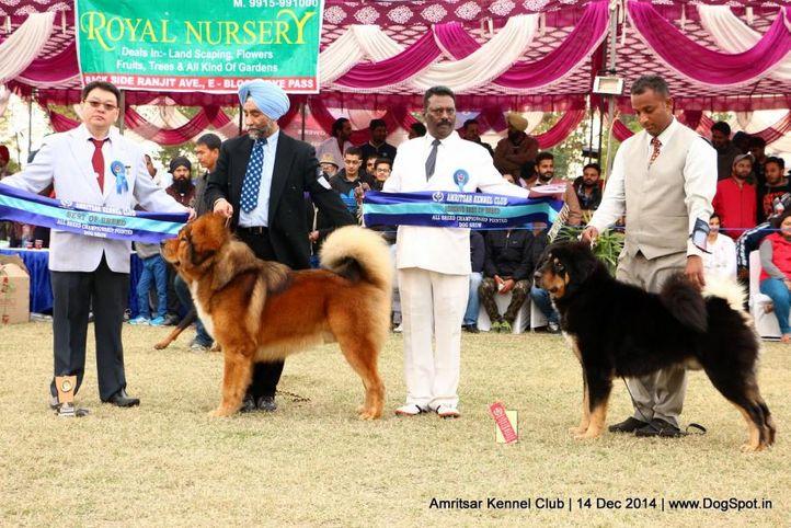 bob,sw-136,, Amritsar Kennel Club, DogSpot.in