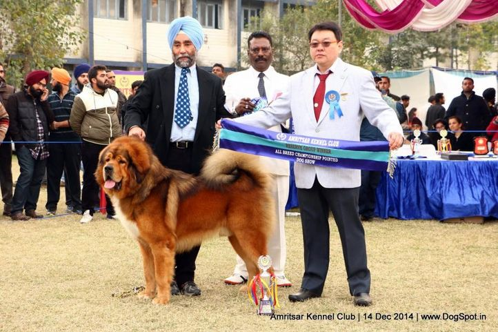 best in group,sw-136,, Amritsar Kennel Club, DogSpot.in