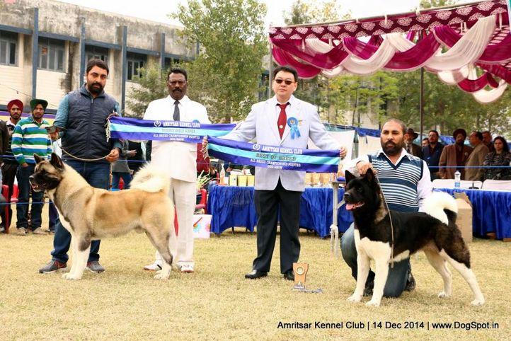 akita,bob,sw-136,, Amritsar Kennel Club, DogSpot.in