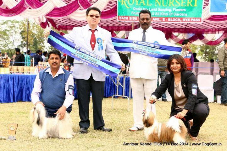 bob,shih tzu,sw-136,, Amritsar Kennel Club, DogSpot.in