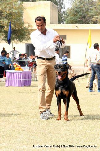 ex-155,rottweiler,sw-135,, BARCIM OF CARNIVOUS, Rottweiler, DogSpot.in