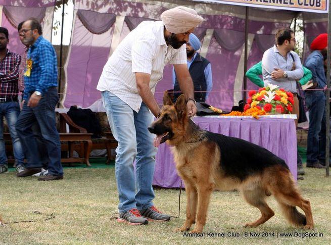 ex-201,german shepherd dog,gsd,sw-135,, FAS TRACKER Z JACK, German Shepherd Dog, DogSpot.in