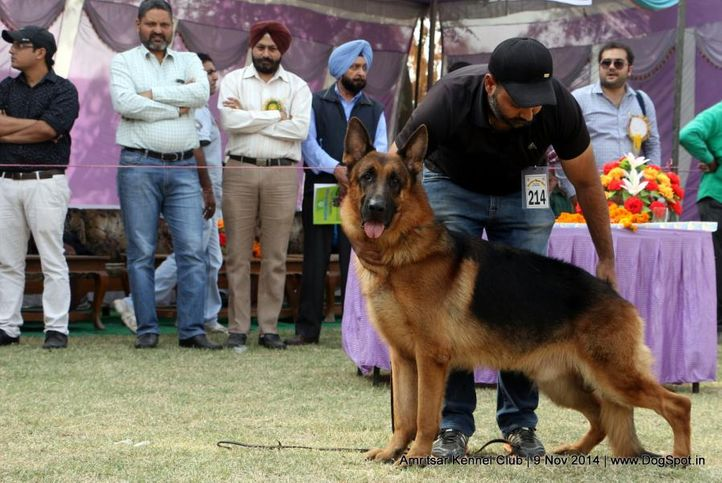 1st best in show ex-214,german shepherd dog,gsd,sw-135,, OTHELLO VOM VOLKERSBERG, German Shepherd Dog, DogSpot.in