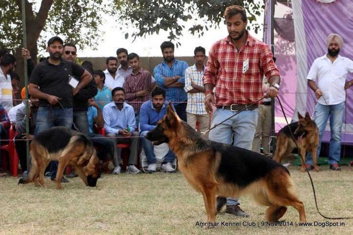 ex-211,german shepherd dog,gsd,sw-135,, PALLIBERG'S BETTY, German Shepherd Dog, DogSpot.in