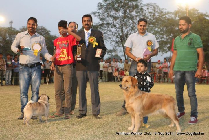 child handler,sw-135,, Amritsar Kennel Club, DogSpot.in
