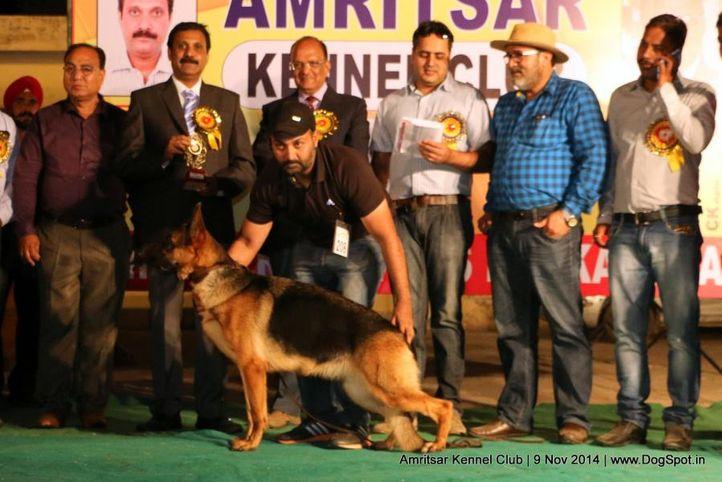 7th best in show,ex-208,sw-135,, AUDI OF WONDERSHEPH , German Shepherd Dog, DogSpot.in