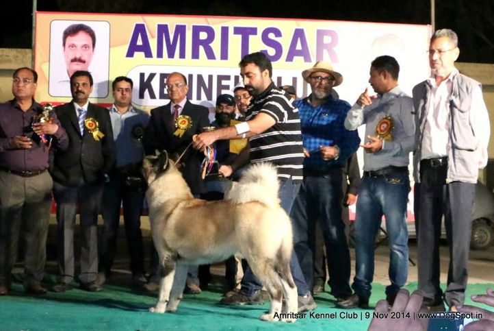 4th best in show,ex-32,sw-135,, AM. CH. ALCHEMIST THEY WILL REMINISCE OVER YOU, Akita, DogSpot.in