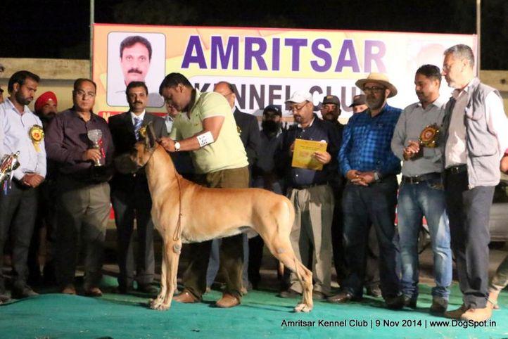 2nd best in show,ex-148,sw-135,, ZAHAR, Great Dane, DogSpot.in