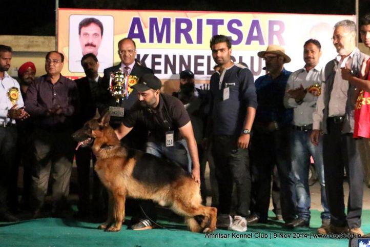 1st best in show ex-214,sw-135,, OTHELLO VOM VOLKERSBERG, German Shepherd Dog, DogSpot.in