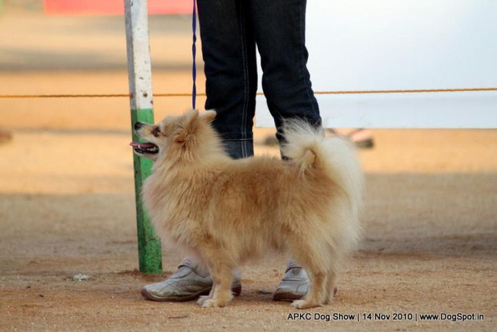 pom,, APKC Hyderabad, DogSpot.in