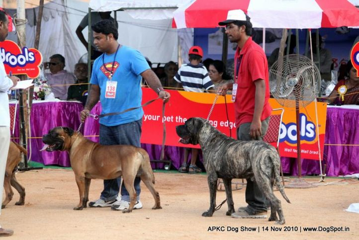 mastiff,, APKC Hyderabad, DogSpot.in