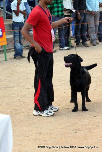 sw-11,ex-255,labrador,, NANI OF PLAYMATE, German Shepherd Dog, DogSpot.in