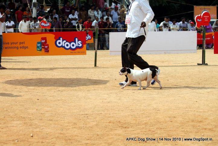 sw-11,ex-112,french bulldog,, Lara, French Bull Dog, DogSpot.in