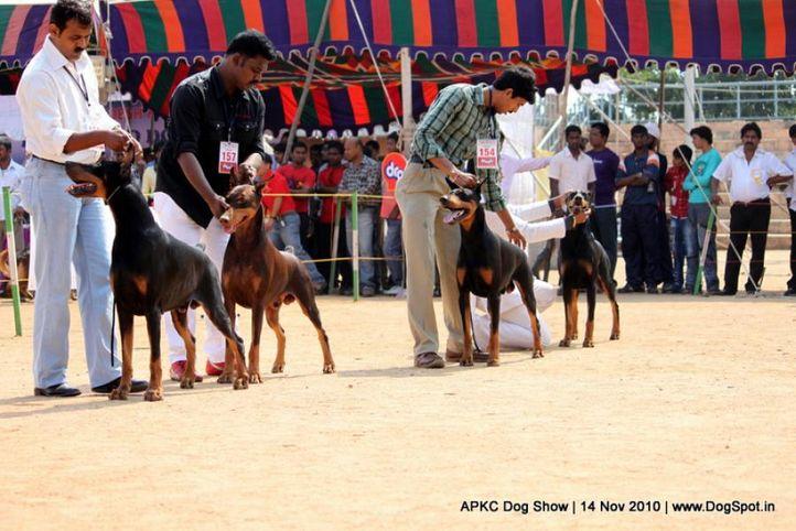 doberman,, APKC Hyderabad, DogSpot.in