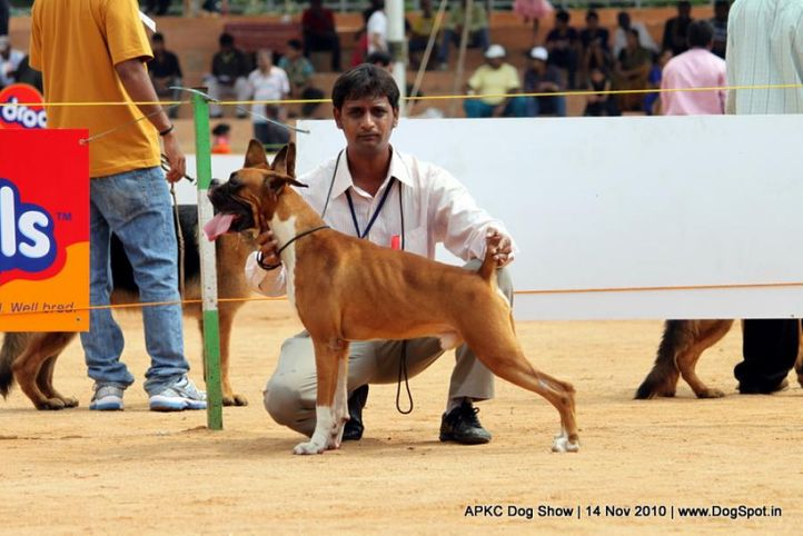 boxer,, APKC Hyderabad, DogSpot.in