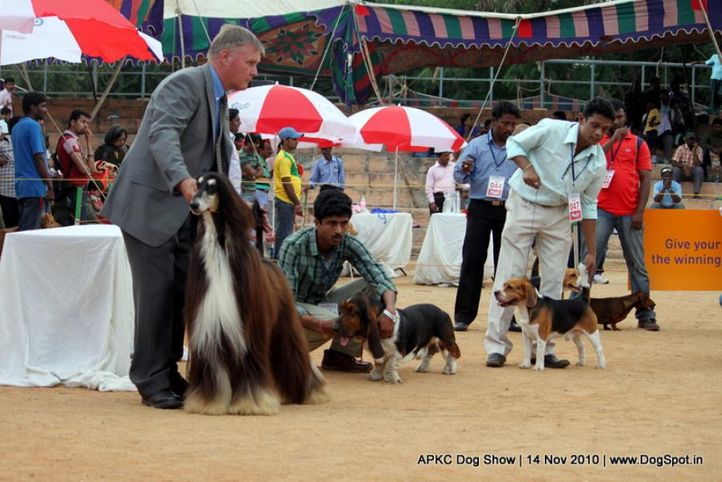 afghan,, APKC Hyderabad, DogSpot.in