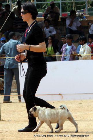 pug,, APKC Hyderabad, DogSpot.in