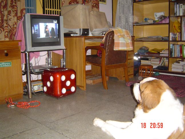 , Ballu watching Sex n the city, DogSpot.in