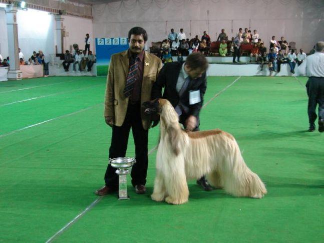 bangalore 2008, Bangalore 2008, DogSpot.in