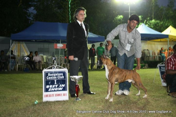 ex-242,lineup,sw-12,, IND. KOR. CH. ORANGE BOXER N CONQUEST'S FIRST, Boxer, DogSpot.in