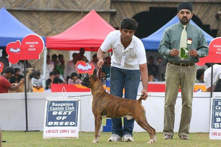 bob,boxer,ex-242,, Bangalore 2010, DogSpot.in