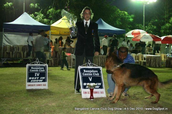 ex-393,lineup,sw-12,, ANDO OF DEEJAY, German Shepherd Dog, DogSpot.in