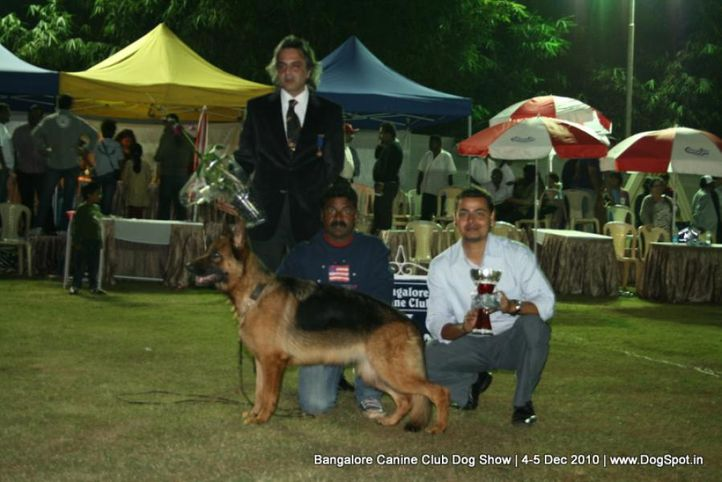 ex-404,lineup,sw-12,, SANRAPS COCABANA, German Shepherd Dog, DogSpot.in