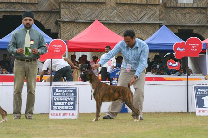 bobr,boxer,ex-245,, Bangalore 2010, DogSpot.in