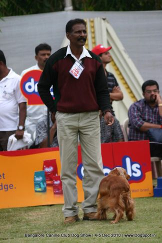 cocker,sw-12,, Bangalore 2010, DogSpot.in