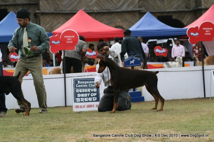 bobr,doberman,ex-257,sw-12,, JUST LADY DE AKIDO SAN, Doberman Pinscher, DogSpot.in