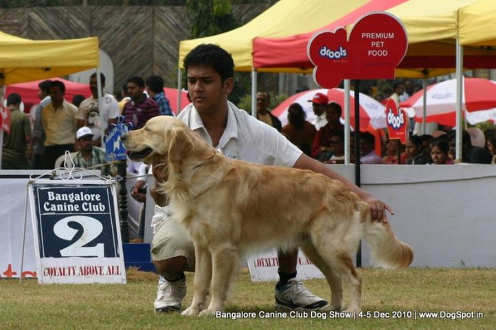 golden,sw-12,, Bangalore 2010, DogSpot.in