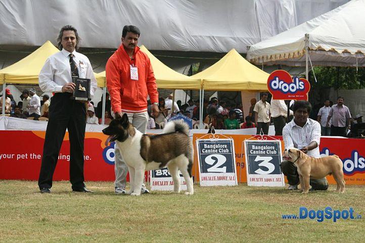 akita,sw-12,, Bangalore 2010, DogSpot.in