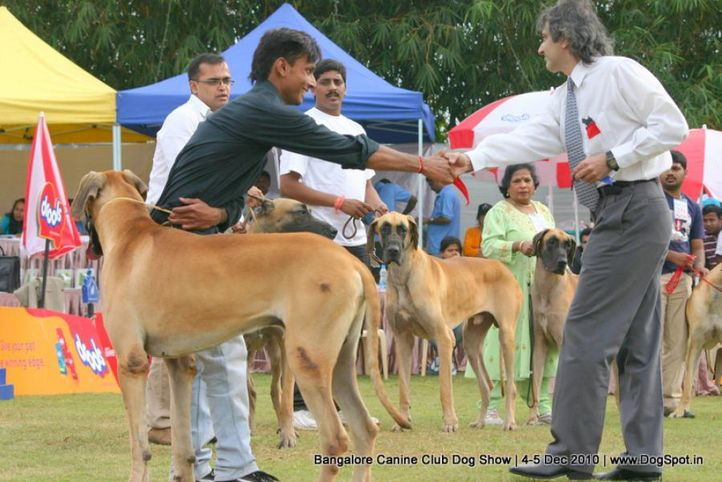 great dane,judging,sw-12,, Bangalore 2010, DogSpot.in