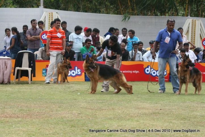 gsd,sw-12,, Bangalore 2010, DogSpot.in