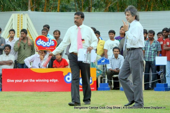 judges,judging,ring stewards,sw-12,, Bangalore 2010, DogSpot.in