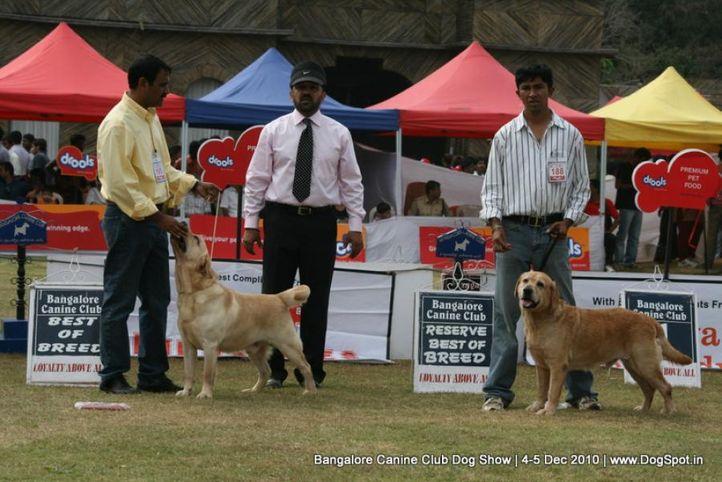 bob,ex-195,labrador,sw-12,, TULLOCHMOHR PERFECT GENT, Labrador Retriever, DogSpot.in
