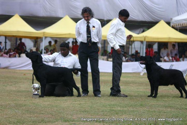 bog,ex-180,labrador,sw-12,, VALLI'S BLACK WARRIOR, Labrador Retriever, DogSpot.in