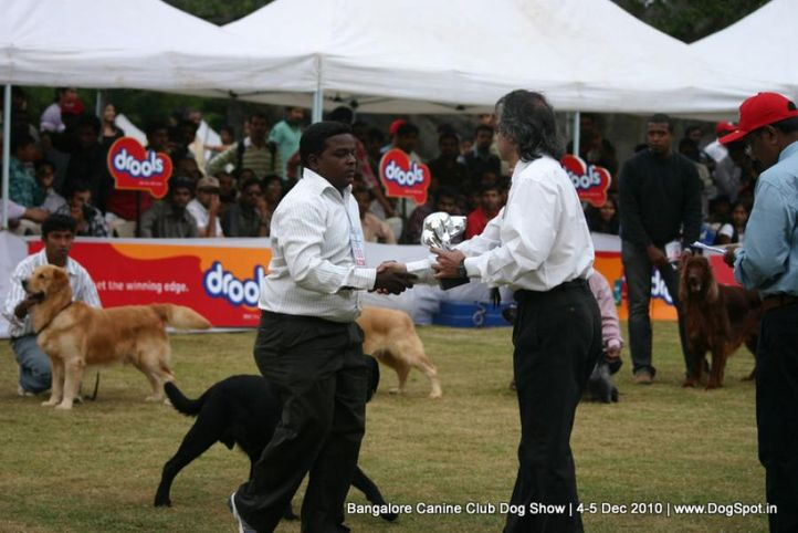 ex-180,labrador,sw-12,, VALLI'S BLACK WARRIOR, Labrador Retriever, DogSpot.in