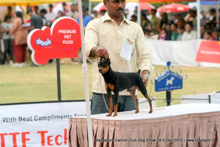 minpin,sw-12,, Bangalore 2010, DogSpot.in