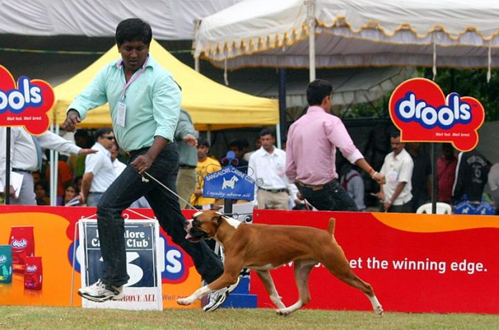 boxer,, Bangalore 2010, DogSpot.in
