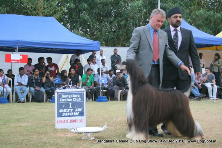ex-85,lineup,sw-12,, IN. CH AUST. CH. SATANG TOPHAT NTAILS, Afghan Hound, DogSpot.in