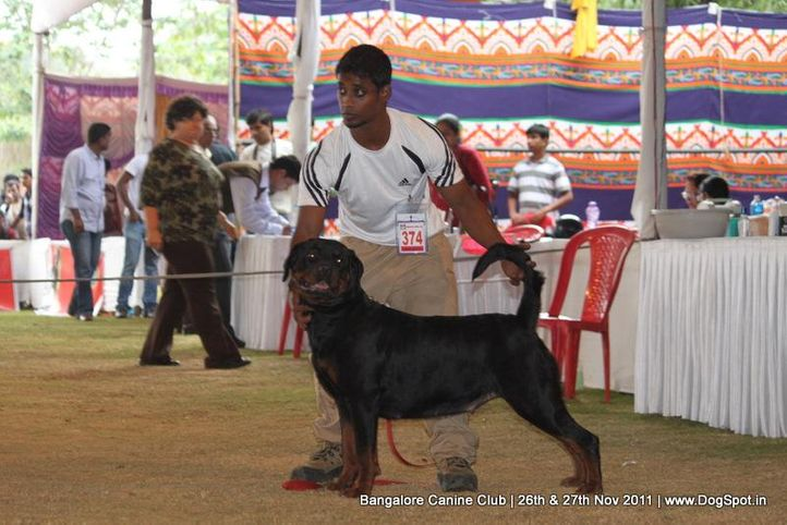 ex-374,rottwieler,sw-49,, Bangalore Canine  Club 2011, DogSpot.in
