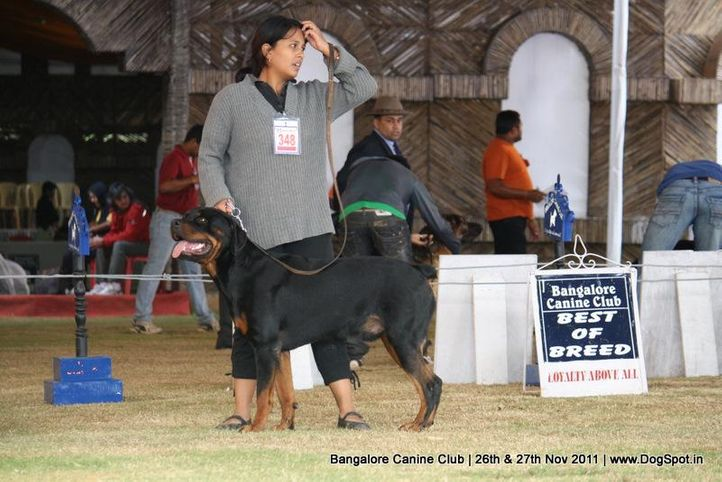 ex-348,rottwieler,sw-49,, Bangalore Canine  Club 2011, DogSpot.in